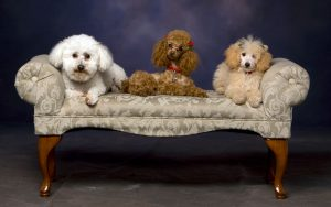 Professional Dog Grooming Services